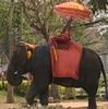 アユタヤ観光 象に乗る Ayutthaya Elephant Palace & Royal Kraal