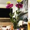 オフィスの花_2021.2