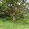 ブログ名「読んだ木」について