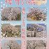 シニアクラブ(90)   春の信州を巡る旅(5)   飯田の名桜iに出合えて