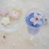 ufu nailのさくらピンクネイル&キレイ色シャンパンで今年の桜を満喫!