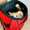 【猫学】わがやではクレート型とリュック型を愛用。愛猫のキャリーバッグは、想定利用シーンにおける移動手段からチョイス。