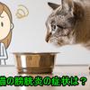 猫の膀胱炎!症状と原因、治し方、自然療法は?