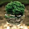 「木」と「樹」の違い