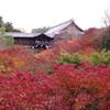 小さく秋を拾う――前回のお題「紅葉」ふりかえり