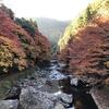 なんか、京都っぽい所に色々行った話  その2  愛宕山を登り紅葉を見る。