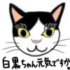いとしの白黒ちゃん、しいたけ5日め、ネコ(20180602_01)