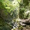 毘沙門谷からダイラ 新緑の中、木漏れ日のシャワーを浴びて   2013.05.12 晴れ