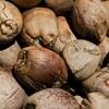 【コーヒー・料理】ココナッツオイルの効能と注意点【マッサージ】
