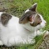 ネコ目線の名作ロシア映画「こねこ」子猫の写真は難しい  猫 成長過程 写真