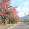 関西、越前、越中、越後の旅(2日目)