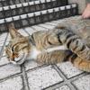 6月前半の #ねこ #cat #猫 その2