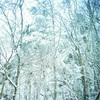 赤城山は猛吹雪でした