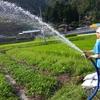 【田舎暮らしビギナー】桐島畑のめいちゃんとまりさんと、茄子に水やりしてきたよ