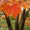 雨と秋が降る庭