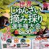 三種のジュンサイ栽培池(秋田県三種)