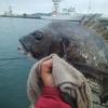 清水 三保 紀州釣り 事故的な2枚
