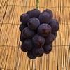 9月21日(ブドウ収穫・配達)