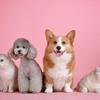 【節約術】お金のかかるペットを飼わずに動物に癒される5つの方法