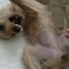 急激に気圧は下がり、人も犬も氣は上がる・・そんな時にも使える技は。