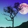 満月前、寝ても寝ても眠い☆満月のパワー☆