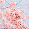 韓国語の썸って何て意味?