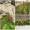 今日の庭と新商品