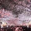 東京桜ランキング1位、目黒川沿いの桜並木のおすすめコース ♡目黒川