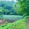 山桜のため池(栃木県宇都宮)