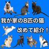 我が家の8匹の猫を改めて紹介!!【全員元ノラ猫】