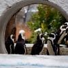 雪の上野動物園で撮る