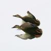 2020年6月の観察記録(野鳥)