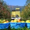 名月の収穫。