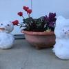 寒い冬は自然の「雪」で遊び、健康とお金を守る!