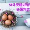 【不妊治療】2回目の体外受精(5AA胚盤胞移植)妊娠判定→陰性