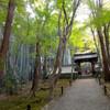 陽光眩しい季節にも行きたい 竹の寺 地蔵院