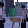 ASUYASUMI --- DAY 4