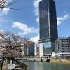 木の道と桜