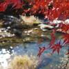 【フォト】紅葉を撮る(大井平公園)