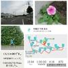 2018年9月3日(月)【10℃前後の朝&見納めのひまわりの巻】