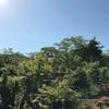風を感じる庭