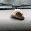 おじさんの貝殻