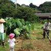 鎌倉だいこんの種植えを行いました!