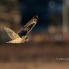 2020年1月3日の鳥撮り-千葉県我孫子市