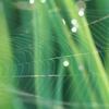 【循環型経済へ】バイオ素材「人工クモ糸」と「ミドリムシプラ」 実用化への道程