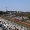 多摩川桜百景 -61. 都立狭山公園と多摩湖-