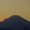 「富士山」と「山茶花」。