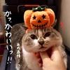 かぼちゃのお祭り