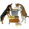 Meal - 犬達の毎日のご飯