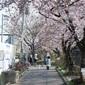 FUJIFILM Xpro2のPROVIAで撮る桜